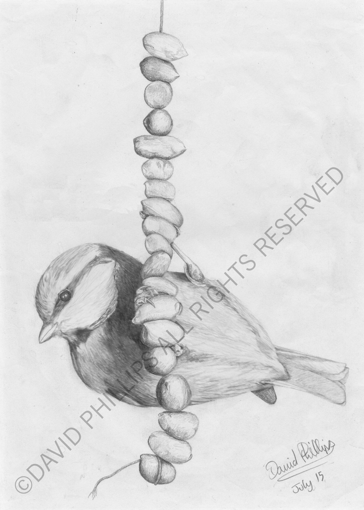 Sketch of Blue Tit