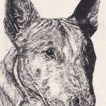 Bull Terrier crop